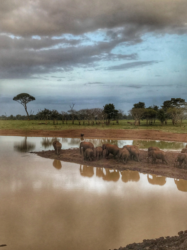 This image has an empty alt attribute; its file name is elephants-at-tree-top.jpg